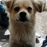 Adopt A Pet :: Casper - Patterson, CA