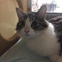 Adopt A Pet :: Precious - Whittier, CA