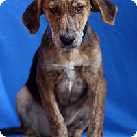 Adopt A Pet :: Gnar - Waldorf, MD