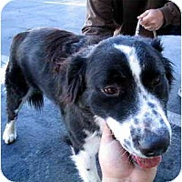 Adopt A Pet :: Dennis - Scottsdale, AZ