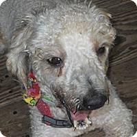 Adopt A Pet :: Pierre - Charlotte, NC