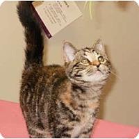 Adopt A Pet :: Mila - Sterling Hgts, MI