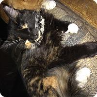 Adopt A Pet :: Muffin&Marley - Clay, NY