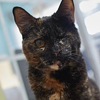 Adopt A Pet :: Pearlie - Los Angeles, CA