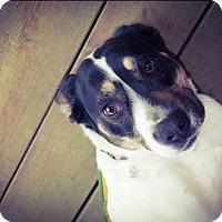 Adopt A Pet :: Sissy - Manhattan, IL