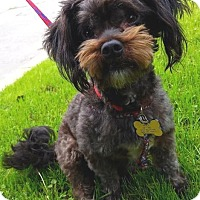 Adopt A Pet :: Bruno - Los Angeles, CA