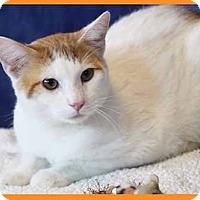 Adopt A Pet :: Milk - South Bend, IN