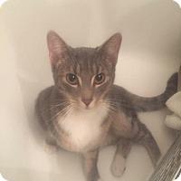 Adopt A Pet :: Mia - LaGrange Park, IL