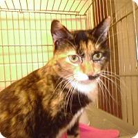Adopt A Pet :: Sassafrass - Muscatine, IA