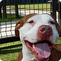 Adopt A Pet :: Osha - Cumming, GA