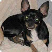 Adopt A Pet :: Daisy 3 - Savannah, GA