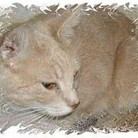 Adopt A Pet :: Sarah - Jacksonville, FL