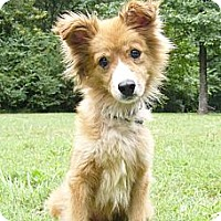 Adopt A Pet :: Dulcie - Mocksville, NC
