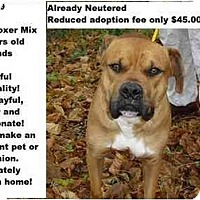 Adopt A Pet :: Tyson - ADOPTED! - Zanesville, OH