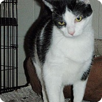 Adopt A Pet :: Misty - Columbus, OH