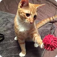 Adopt A Pet :: Chip - McDonough, GA