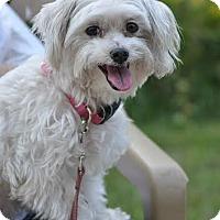 Adopt A Pet :: Gwennie - Ormond Beach, FL