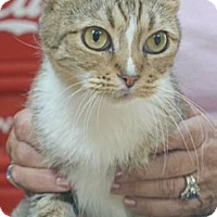 Adopt A Pet :: Cindy - Reston, VA