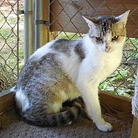 Adopt A Pet :: Tia - Marlboro, NJ