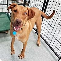 Adopt A Pet :: Rueben - San Angelo, TX