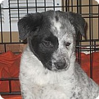 Adopt A Pet :: Jack - Oak Creek, WI