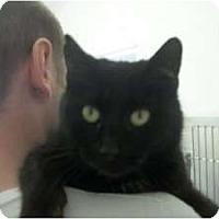 Adopt A Pet :: Ziva - Warren, MI