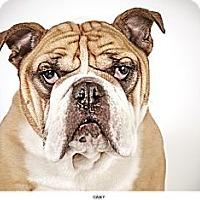 Adopt A Pet :: Casey - New York, NY