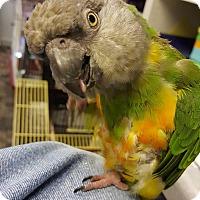 Adopt A Pet :: Olive - Lenexa, KS