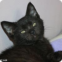 Adopt A Pet :: Cardiff - Ann Arbor, MI