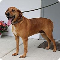 Adopt A Pet :: Riley - Spring Valley, NY