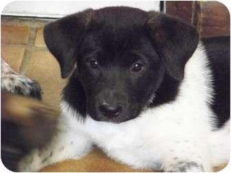 Akita Mix Dog for adoption in Virginia Beach, Virginia - Panda