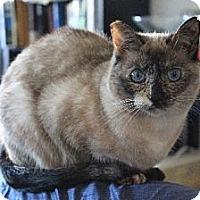 Adopt A Pet :: Lena - Los Angeles, CA