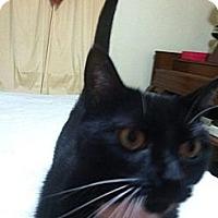 Adopt A Pet :: Juliet - Jacksboro, TN