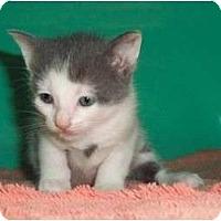 Adopt A Pet :: Kathleen - Secaucus, NJ