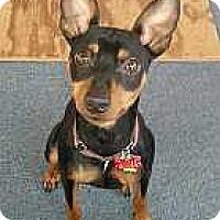 Adopt A Pet :: Fonzie - Columbus, OH