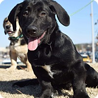 Adopt A Pet :: Peanut - Knoxville, TN