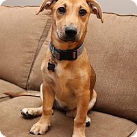 Adopt A Pet :: Gracie - Newtown, CT