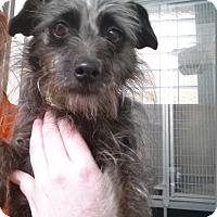 Adopt A Pet :: Picnic - Westminster, CA