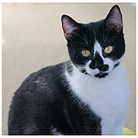 Adopt A Pet :: Smudge - Forked River, NJ