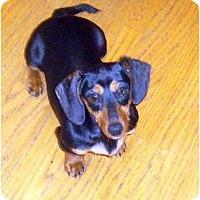Adopt A Pet :: Sprite - San Jose, CA