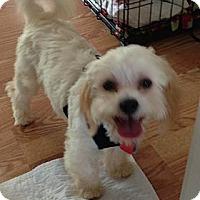 Adopt A Pet :: Reese - South Amboy, NJ