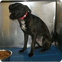 Adopt A Pet :: Cinder - Toronto/Etobicoke/GTA, ON