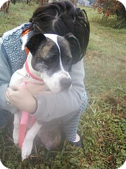 Hound (Unknown Type)/American Pit Bull Terrier Mix Dog for adoption in North, Virginia - Mary Jane