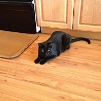 Adopt A Pet :: Sabrina - Phoenix, AZ