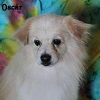Adopt A Pet :: Oscar - Phelan, CA