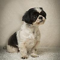 Adopt A Pet :: Lucy Rose - Davie, FL