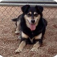Adopt A Pet :: Moon Dog - Golden, CO