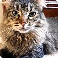 Adopt A Pet :: Merrin - Alexandria, VA