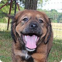 Adopt A Pet :: Olexa - Spring Valley, NY