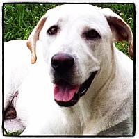 Adopt A Pet :: McDUFF - Wakefield, RI